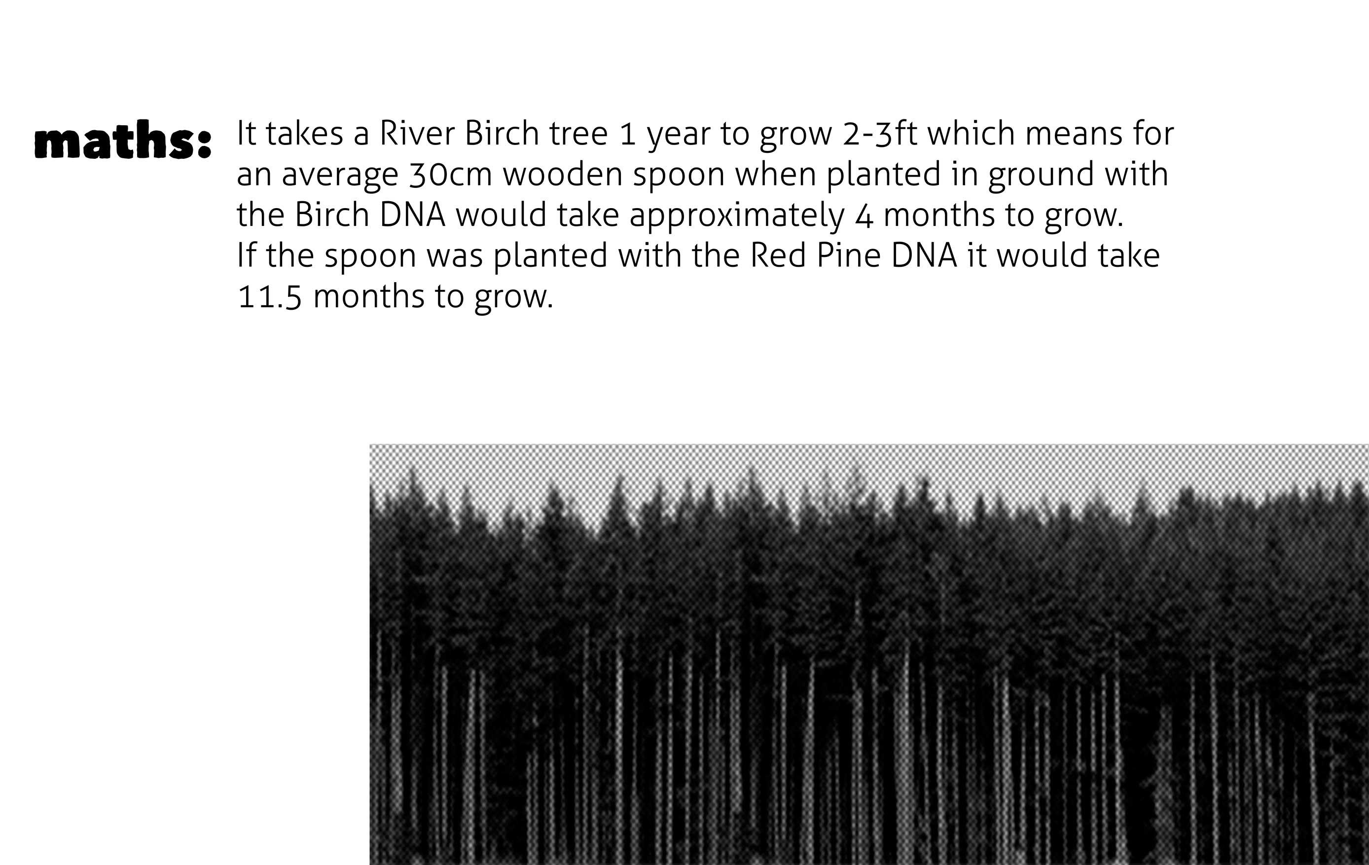 Presentation-3D-Growing-Alice-Wheeler-5